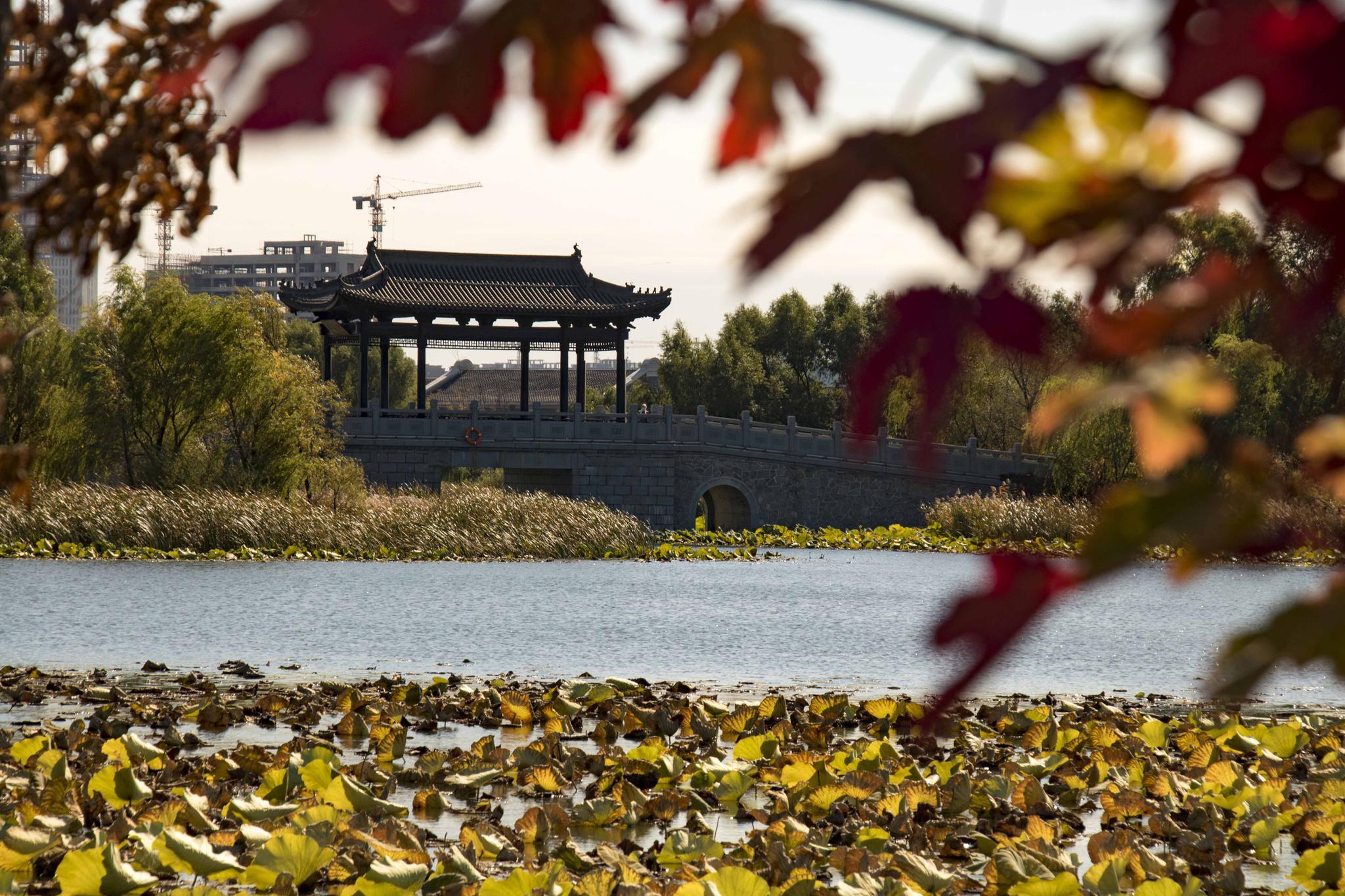 长春新区北湖科技开发区秋色正浓