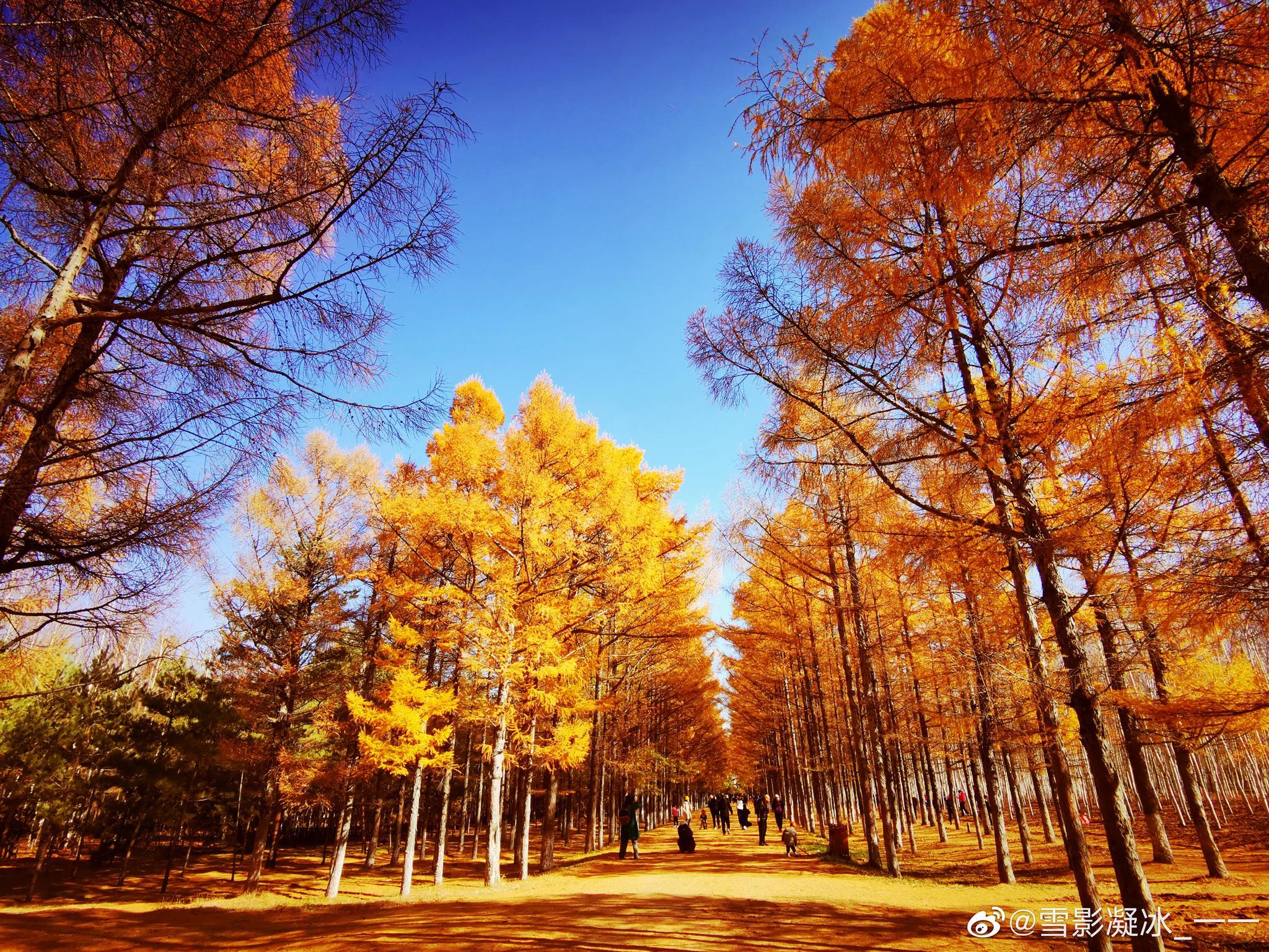 秋高气爽夜来霜 数树深红出浅黄