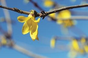 天渐暖 花初开 树萌芽 草新绿