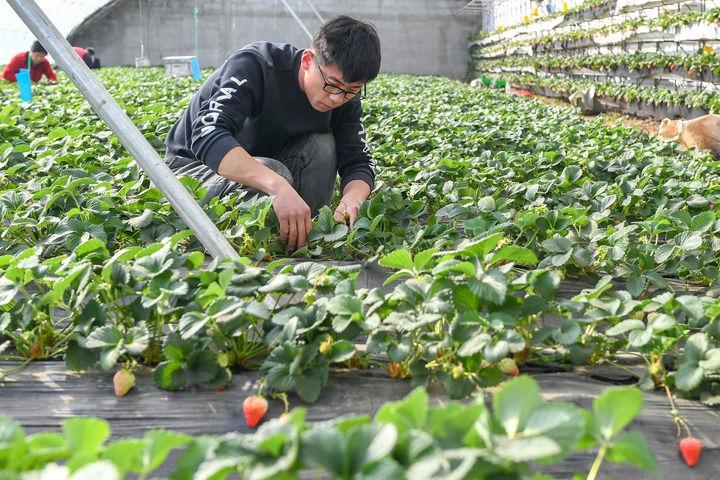四平市梨树县:春季大棚农事忙