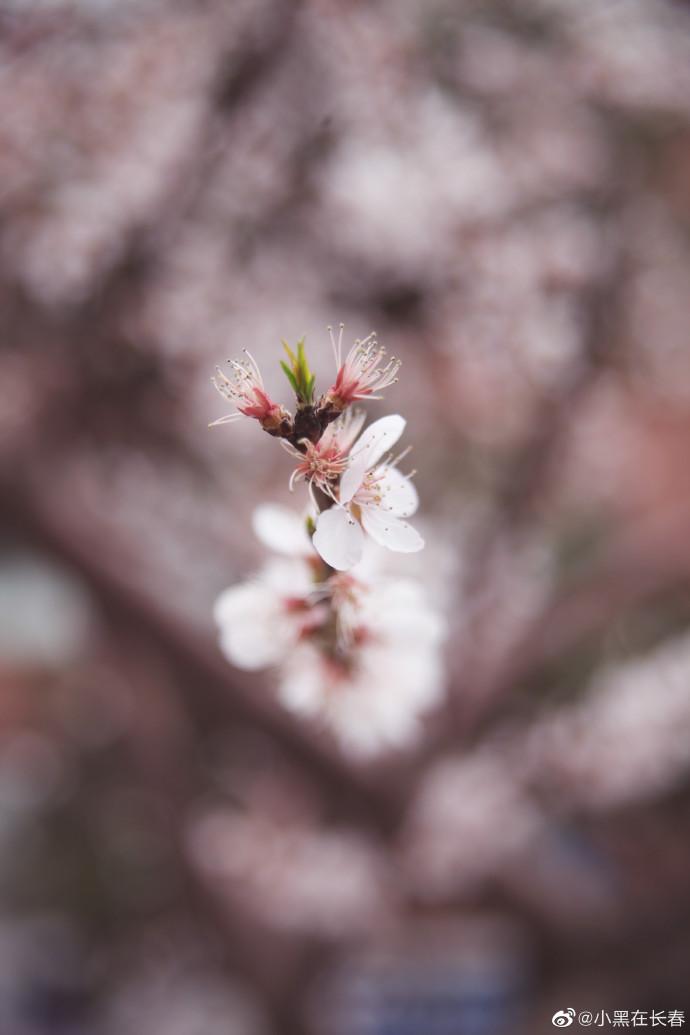 一帘红雨桃花谢 十里清阴柳影斜