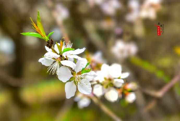 春花春时耀春城 不负人间四月天