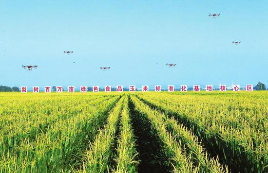 7月22日,梨树县国家百万亩绿色食品原料(玉米)标准化生产基地核心示范区内,植保无人机正在田间作业。记者丁研摄