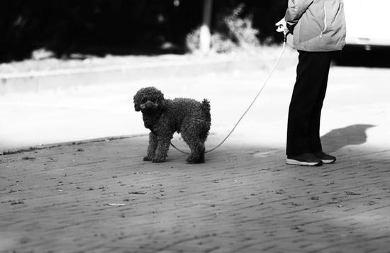 遛狗拴狗绳是市民素质的体现,全社会理应大力提倡