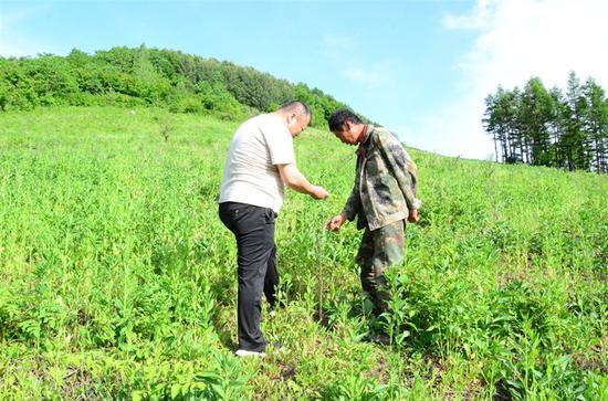 肖明君与村民在种植基地检查种植情况