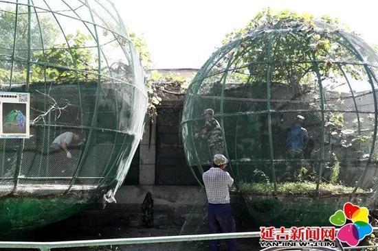 正在修缮动物笼舍
