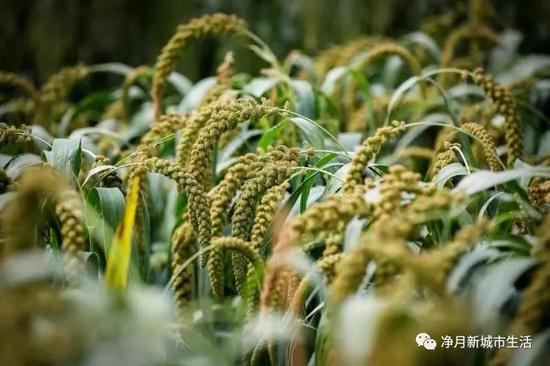 农博会是农业科技大课堂,室外种植区展示了各种农作物高产高效的种植技术。