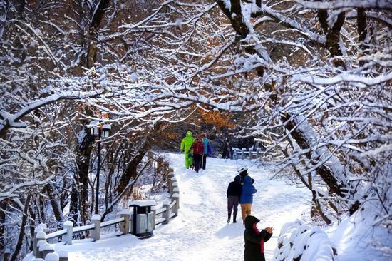 游人在雪后美景中嬉戏