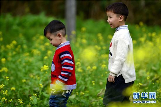小朋友在龙胜各族自治县马堤乡张家村油菜花田中踏春。