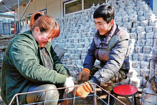 抚松县北岗镇蒲春河村发展食用菌产业,让贫困户走上了脱贫致富路。图为杨子亮夫妇在打包木段培植灵芝。
