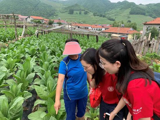 """临江市""""百所高校进白山""""大学生暑期社会实践活动进行时"""