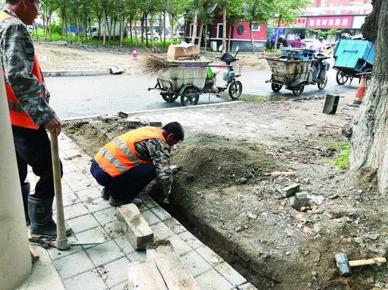 ▶维修人员正在修复人行步道上的边界石。 赵雪 摄