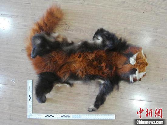警方查获的小熊猫皮 警方供图