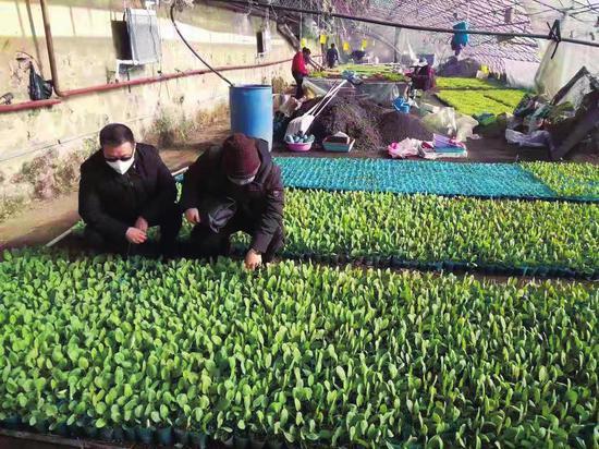 丰满区农业技术人员在指导棚膜生产。