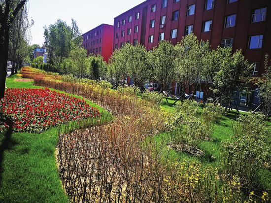 吉林市昌邑区和平路绿化美化治理后的景色。
