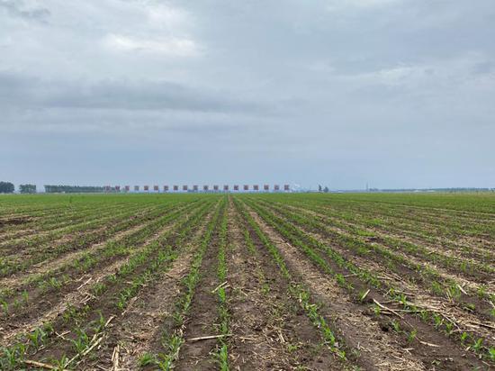 梨树百万亩绿色食品玉米标准化基地核心区
