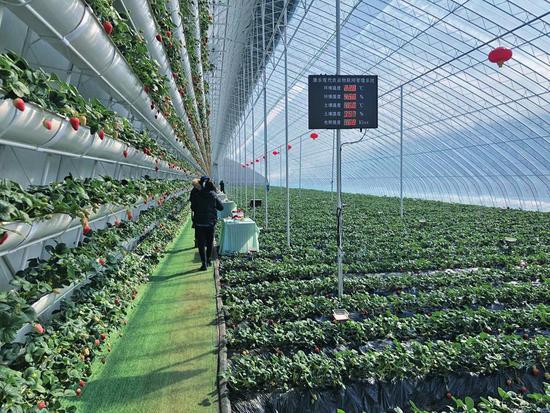 柳河县红石镇由家村的4栋科技草莓大棚每年收益最低12万元,用于扩大村集体经济收入和增加全村贫困户持续增收。