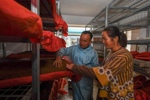 9月25日,在吉林省白山市靖宇县大北山村,高秀虎(左)与妻子查看灵芝孢子粉干燥情况。新华社记者 张楠 摄