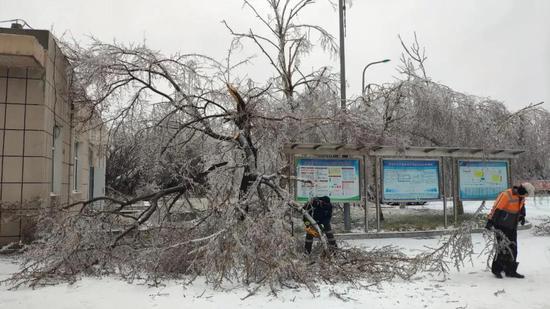 第四净水厂抢修队员清理被压塌的树枝,保证户外大型阀门的操作空间