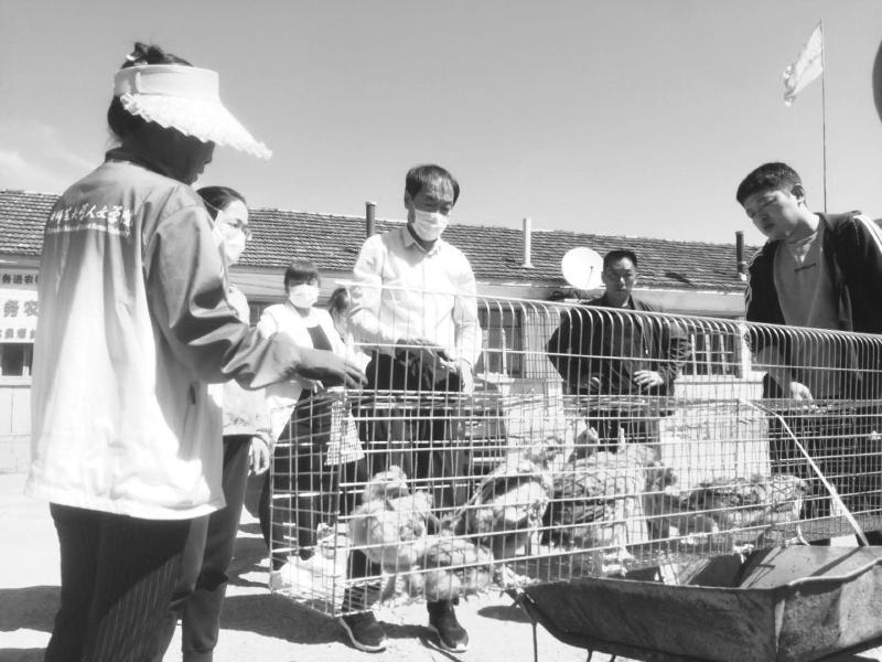 图为该局职工把鸡雏送到贫困户家中。