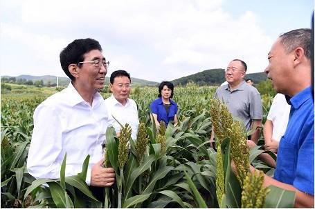 8月10日,巴音朝鲁在中科院辽河源生态农业研究与示范基地调研。宋锴/摄