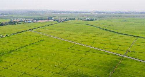 黑土地上是我家——在吉林,一瞥中国东北乡村美丽未来