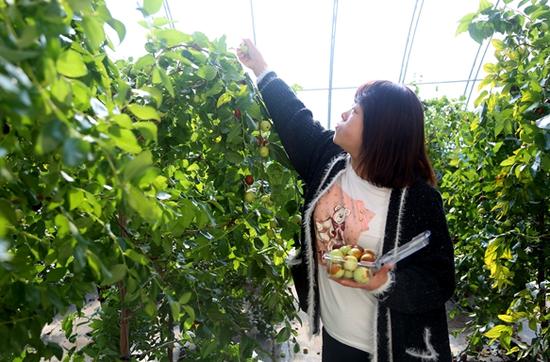 延吉大枣采摘节暨农特产品展销会迎游客满园