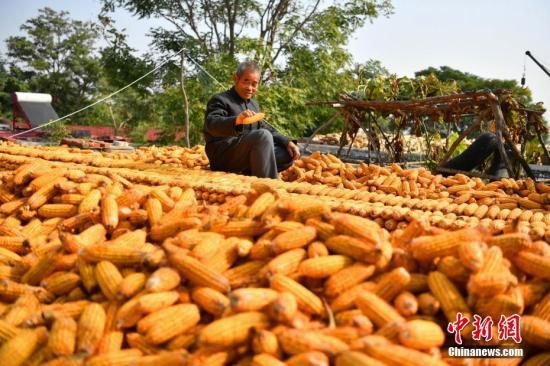 资料图:玉米丰收。 中新社记者 翟羽佳 摄