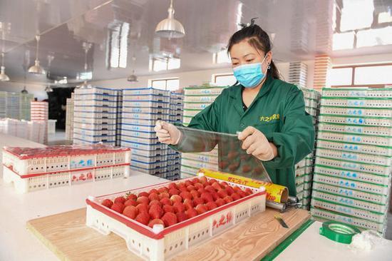 3月18日,在梨树县六之维农民种植专业合作社,农民在包装草莓。