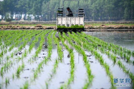 5月17日,镇赉县大屯镇的农民驾驶农机在田间插秧。