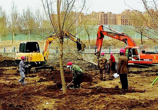 工人正在进行大型乔木栽植。 记者庄新岩摄