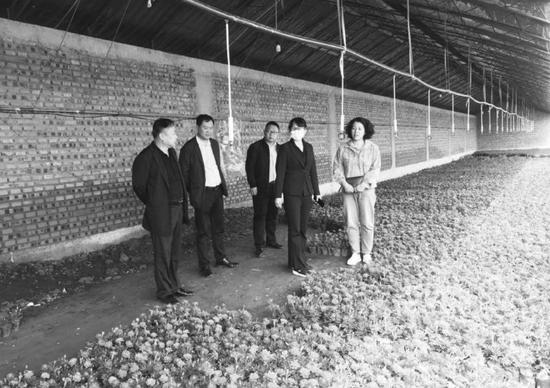 残疾人扶贫基地头道镇东村花卉栽培项目。刘洋摄