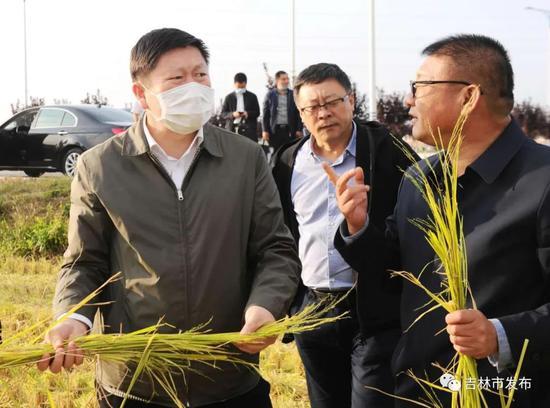 吉林市市长贺志亮(左一)在市东福米业有限责任公司绿色水稻种植基地查看粮食收割情况。