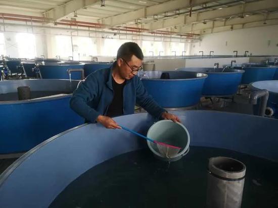 工作人员在温水鱼车间里进行鱼类养殖。