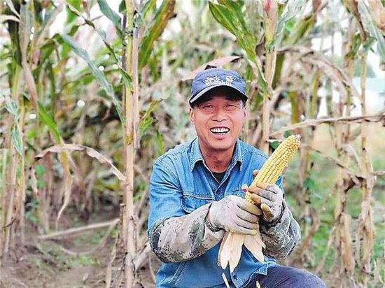 夹信子村的玉米丰收了,农民脸上洋溢着喜悦的笑容。 吉林日报记者 姜岸松 摄