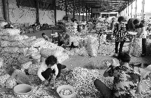 4月13日,在河南省中牟县的一个大型蔬菜批发市场,蒜商在分拣大蒜,批发价格每斤5元-6元不等。 新华社 发