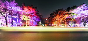 美丽的彩灯让新民大街更具魅力。 摄影 石天蛟