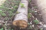 万科兰乔公寓树木被砍 业主呼吁:谁来管管这事