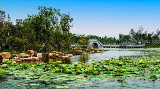 长春北湖国家湿地公园景色