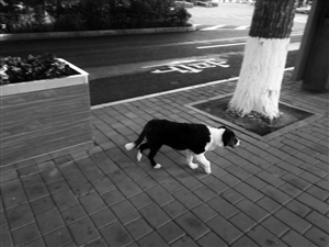 徐大爷丢失的爱犬。 读者供图