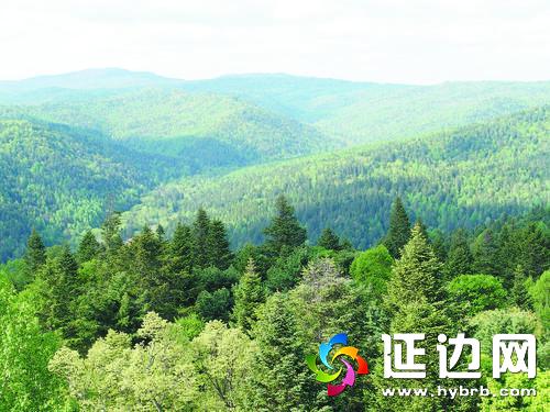 百万亩采育林