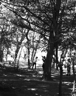 两名男子在南湖公园树林用弹弓打松鼠。 市民供图