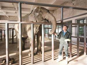 """饲养员正在给大象""""昂亚""""喂食。李子涵 摄"""