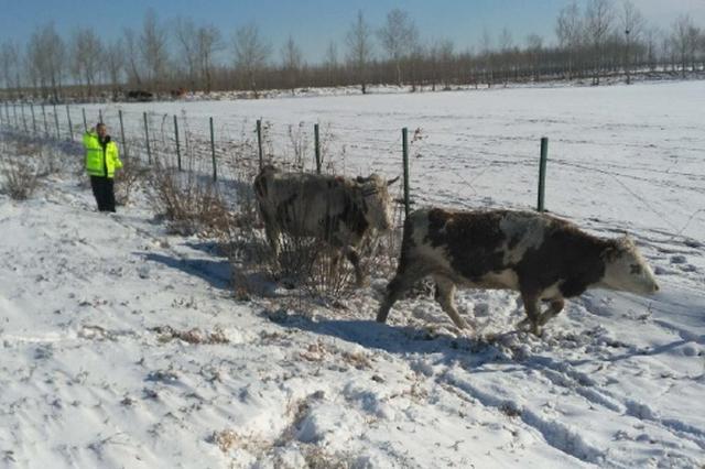 至16日8时 吉林中东部大部分地区积雪深度5-10厘米