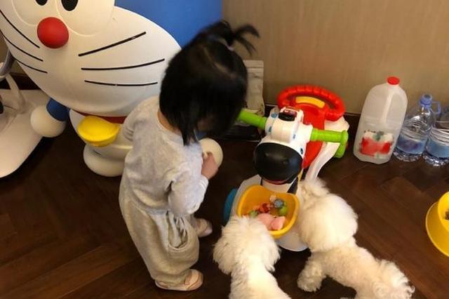 奶爸陈赫晒女儿背影照 安安狗狗和玩偶童趣十足