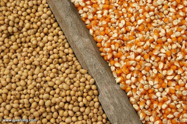 吉林省在东北率先出台玉米和大豆加工补贴政策