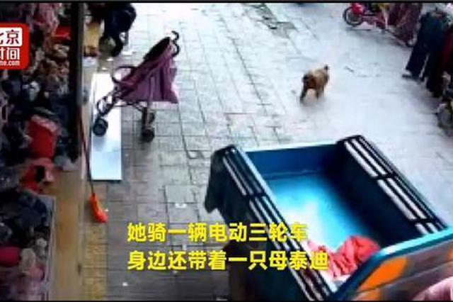 """女子用母泰迪""""诱拐""""8只公泰迪 网友:仙狗跳"""