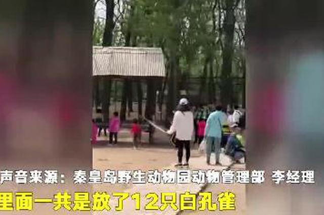 动物园白孔雀遭小孩追逐拔毛 家长一旁围观(视频)