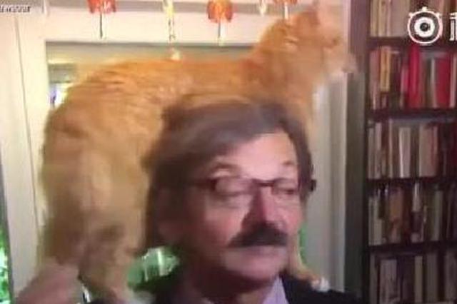 萌!波兰专家受访谈国事 爱猫乱入撒娇实力抢镜