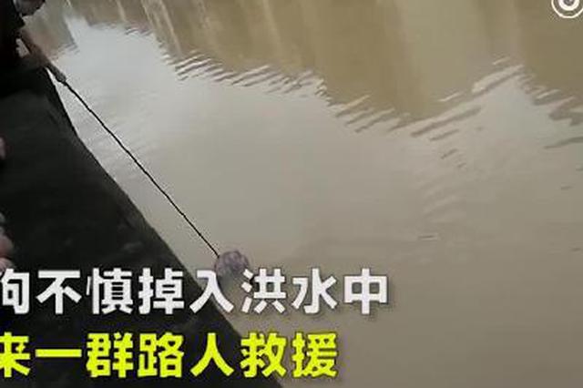 小狗不慎掉入洪水 路人合力将其救上桥